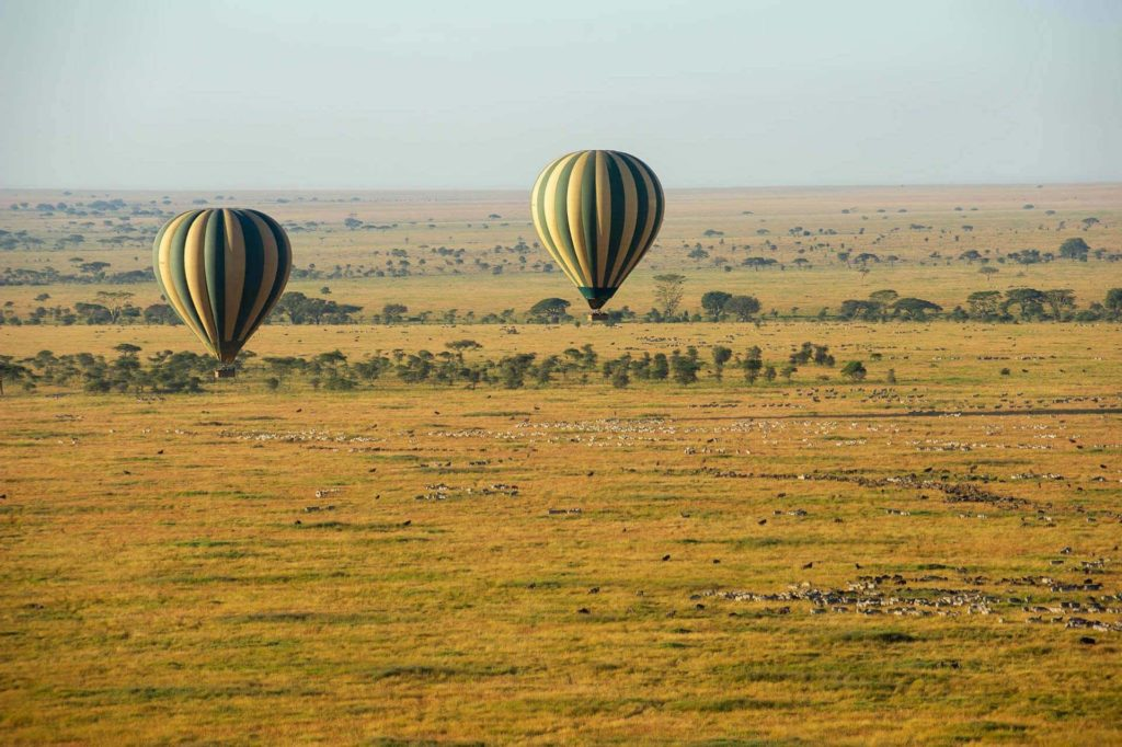 This image has an empty alt attribute; its file name is 2_balloons_Zebra_Wildebeest_1920_1278_70_c1-1024x682.jpg